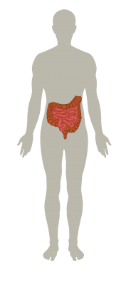 Image for category Gastro intestinal