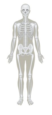 Image for category Muscoloskeletal
